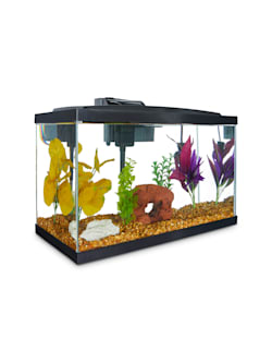 Fish Tank 12 X 7 X 9 (Without Stand)